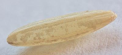 Grano de arroz basmati integral, 2020-06-12, DD 01-11 FS.jpg