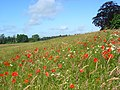 Grassland, Easthampstead - geograph.org.uk - 867790.jpg