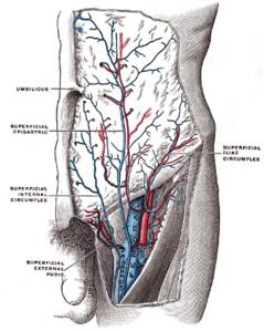 la prostata ingrossata può portare dolore al rene lyrics