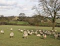 Grazing land, Broomhill Farm - geograph.org.uk - 360398.jpg