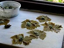 Preparazione dei dolmádes greci di riso su foglie di vite