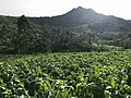 Green Scenery of Sukapura Village in West Java, Indonesia.jpg