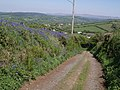 Green lane to Chillaton - geograph.org.uk - 427360.jpg