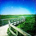 Greenwich mobile parabolic dunes access boardwalk, Prince Edward Island, Canada - panoramio.jpg
