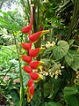 Grenada, Karibik - Flowers at Annandale Waterfalls at Willis - panoramio.jpg