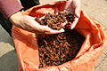 Guangxi - star anise farm in china 2005 6782.jpg