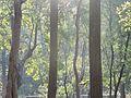 Gudguda forest.jpg