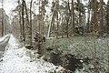 Hövelhofer Wald - Sturmschäden - 1.jpg