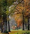 Hagley Park New Zealand. (23) (8069598533).jpg
