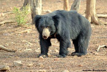 Hair over Bear.jpg