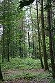 Hampt Woods - geograph.org.uk - 442404.jpg