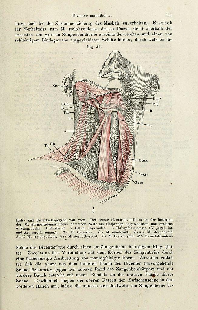 Fantastisch Bild Der Anatomie Des Menschlichen Körpers Fotos ...