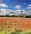 Harvest - panoramio - Mario Hains.jpg