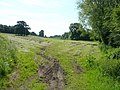 Hay field behind Weston Hall - geograph.org.uk - 841492.jpg