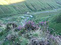 Heather on pathway above Grey Mare's Tail - geograph.org.uk - 552067.jpg