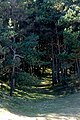Hedderwick Hill Plantation, John Muir Country Park - geograph.org.uk - 1231136.jpg