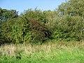 Hedgerow Harvest - geograph.org.uk - 261795.jpg