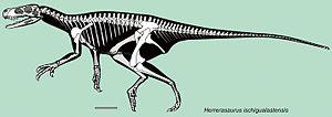 Herrerasaurus - Skeletal reconstruction