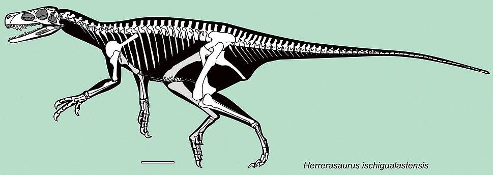 Herrerasaurus skeletal
