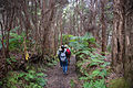Hiking through the forest on the Halemaʻumaʻu trail.jpg