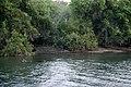 Hippopotamus in Zambesi River - panoramio.jpg