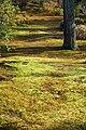 Hogon-in Kyoto Japan09s3.jpg