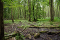 Hoher Vogelsberg Wannersbruch NR 319289 Alnus glutinosa Coarse woody debris Swamp River source.png