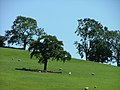 Hollaway Hill - geograph.org.uk - 61218.jpg