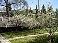 Horizontal Trees (4631758804).jpg