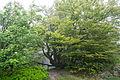 Horn-Bad Meinberg - 2014-05-02 - Velmerstot (28).jpg