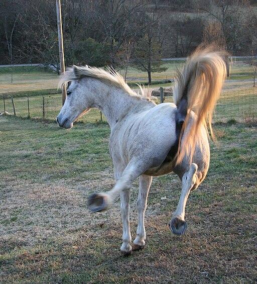 HorseKick