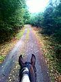 Horse view03.jpg