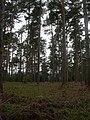 Hurn Forest - geograph.org.uk - 1285931.jpg