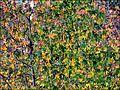 I colori dell'autunno - panoramio (2).jpg