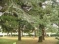Il bosco dell' oratorio di Porto d'Adda.jpg