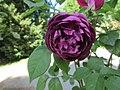 Ile aux Roses 021.jpg