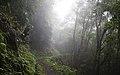 Ilha das Flores P5290313 (35839627372).jpg