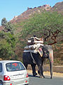 India - Jaipur2 - 004 - Elephant knows his own way home (2178442367).jpg
