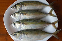 Indian mackerel - Wikipedia