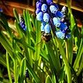 Insects JIHI 030.jpg