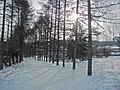 Irkutsk. Akademgorodok. February 2013 - panoramio (114).jpg