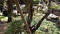 Isalo National Park 2013 39.jpg