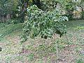 Jókai kertje 2012 (33).JPG