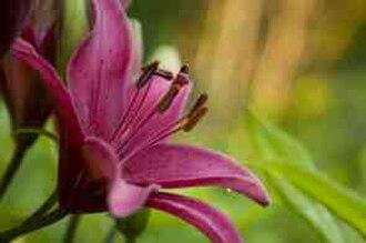 New Brunswick Botanical Garden - The New Brunswick Botanical Garden