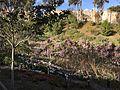 Japanese Friendship Garden (Balboa Park, San Diego) 27 2016-05-14.jpg