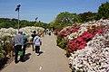 Japanese wisteria, Ashikaga Flower Park 15.jpg