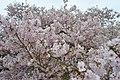 Japanse Tuin Hasselt - 02.jpg