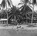 Javaanse kampong in de Van Drimmelenpolder in Nickerie, Bestanddeelnr 252-5528.jpg