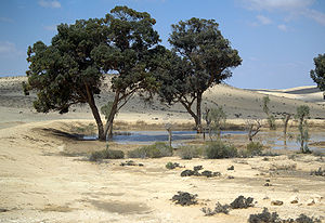 Afforestation - JNF trees in the Negev Desert.  Man-made dunes (here a liman) help keep in rainwater, creating an oasis.