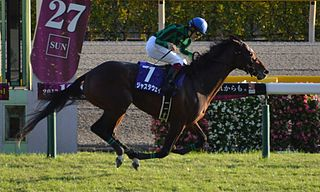 Just A Way Japanese-bred Thoroughbred racehorse